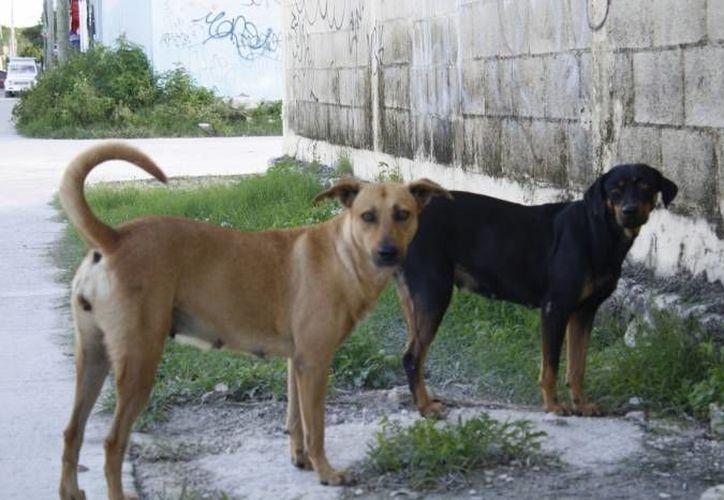 Piden a los ciudadanos denunciar actos de maltrato hacia animales en asociaciones como Pro Animal. (Archivo/SIPSE)