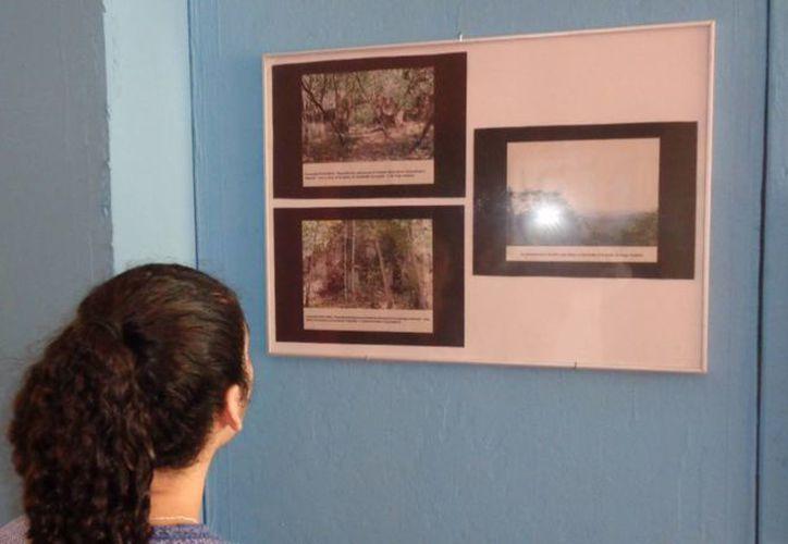Celebran en Día Mundial del Arte en  con muestras fotográficas, pinturas y esculturas. (Ángel Castilla/SIPSE)