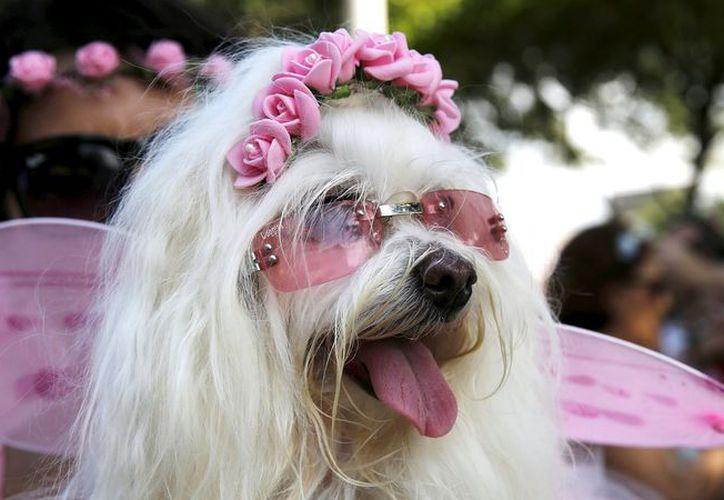 Realizarán un desfile de modas canina y concursos. (Foto: Contexto/Internet)