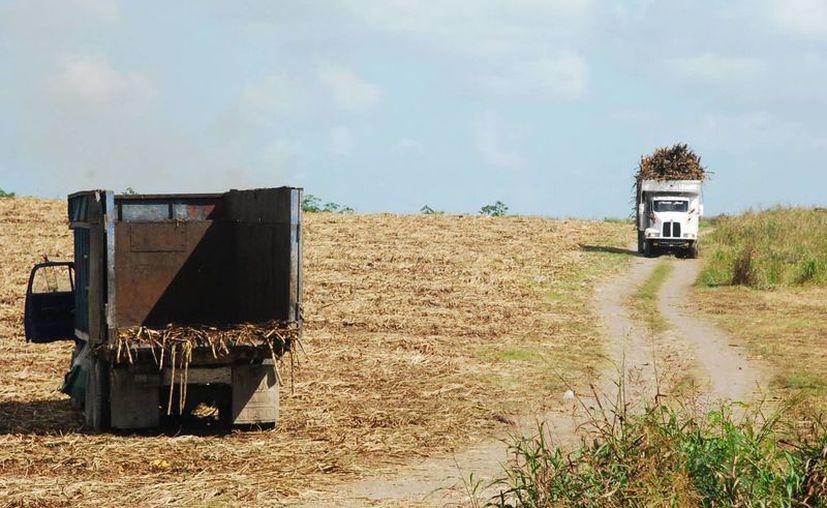 La zona cañera es propensa a la filtración de contaminantes a la tierra de cultivo. (Edgardo Rodríguez/SIPSE)