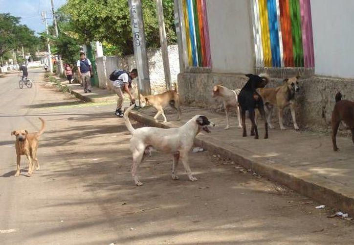En el reglamento no se menciona el número de perros que hay actualmente en las calles. (Contexto/Internet)