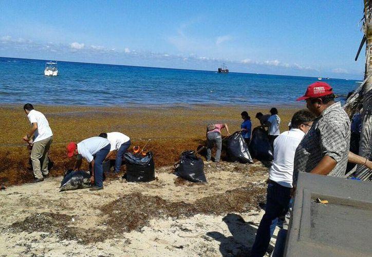 Alrededor de 150 personas participaron en la recolección de sargazo en la costa de Cozumel. (Cortesía)
