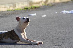 Fauna callejera <i>invade</i> fraccionamiento Urbi Villas