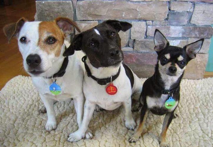 Hoy se realiza la campaña 'emplacamiento gratuito' de perros en Cancún. (Mundo Feliz)
