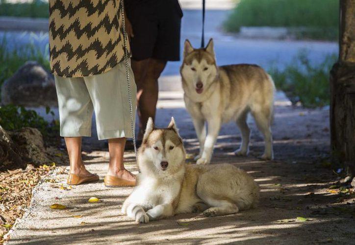 Dos mujeres conversan mientras sus perros, dos huskies siberianos, descansan. (AP/Desmond Boylan)