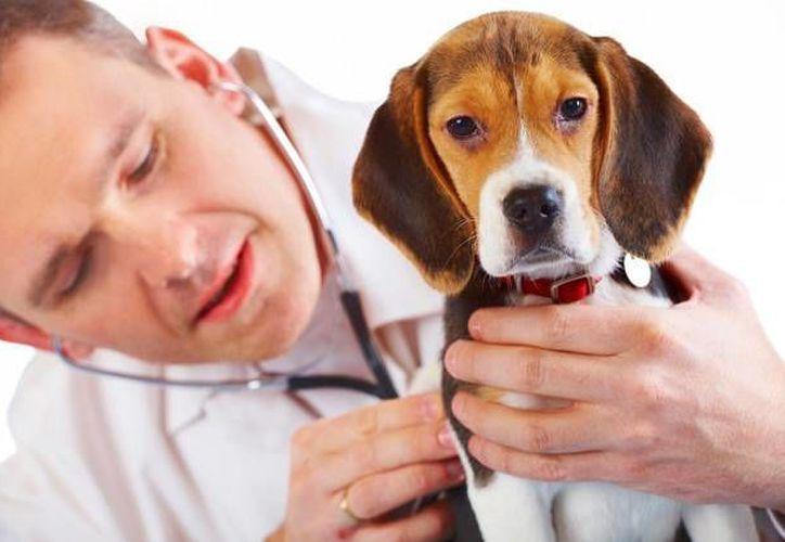 Las vitaminas ayudan al cuerpo de las mascotas a formar huesos, dientes y tejidos conectivos. (Redacción/SIPSE)