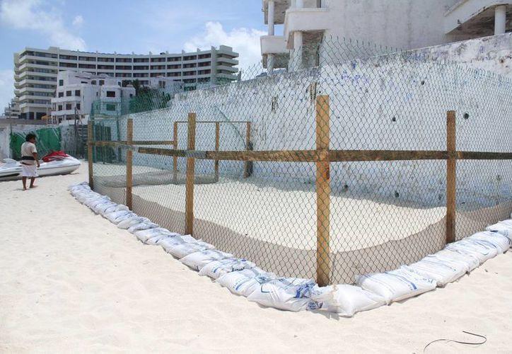 De tortuga caguama hay 19 campamentos en playas de cinco Estados del Golfo y Caribe mexicano, de los cuales la entidad es líder con 15. (Sergio Orozco/SIPSE)