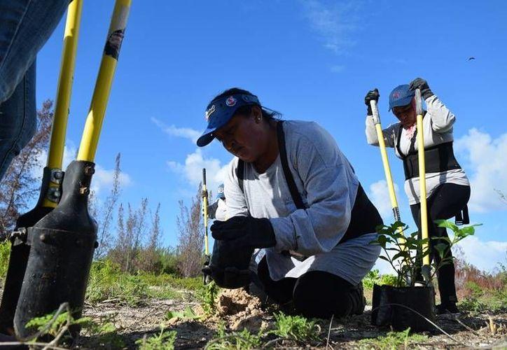 Un especialista en la materia asesora a las féminas para realizar la labor de rescate de flora en los ecosistemas. (Foto: Gustavo Villegas/SIPSE)