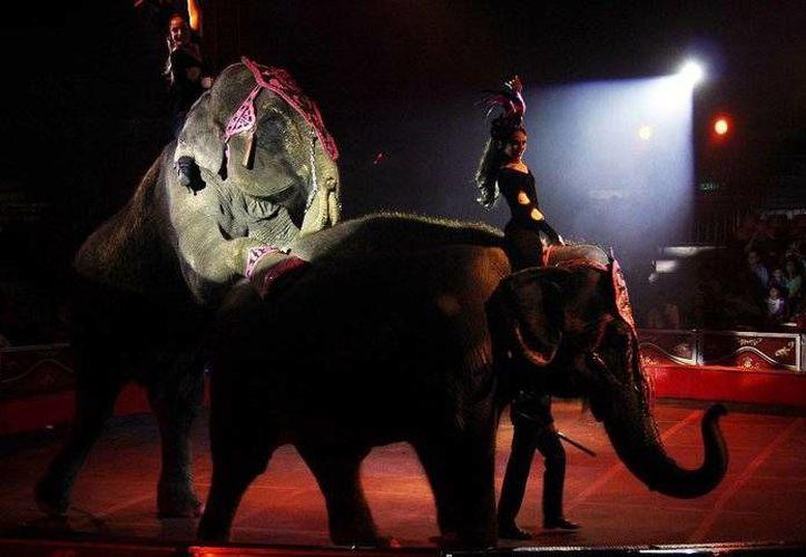 La administración municipal actual de Solidaridad niega permisos de operación a circos con animales. (Redacción/SIPSE)