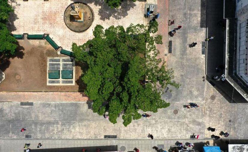 La Cruzada cerró con la plantación de cuatro mil árboles que donó el grupo La Gas. (Foto: Christian Coquet)