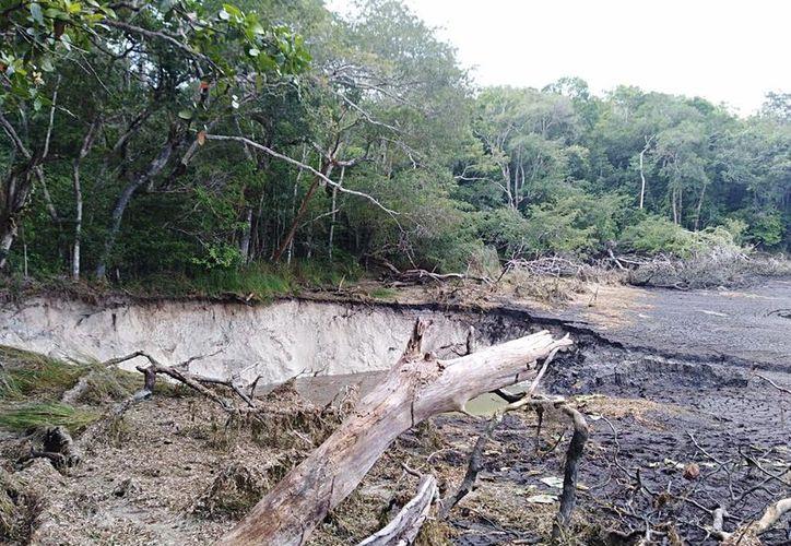 """""""Se abrió la tierra, se cuarteó parte del terreno, se llevó la laguna, árboles y todo"""". (Joel Zamora/SIPSE)"""