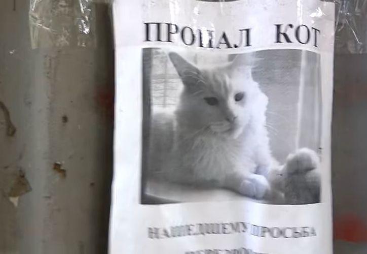 La imagen del gato fue colocada por su dueño luego de que se extraviara.(Captura)