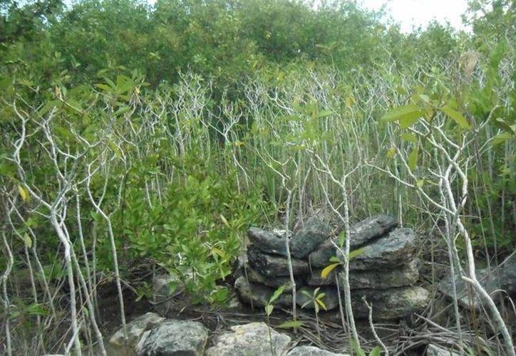 Autorizan tipo de uso de suelo que debe haber en Sian Ka'an. (Israel Leal/SIPSE)