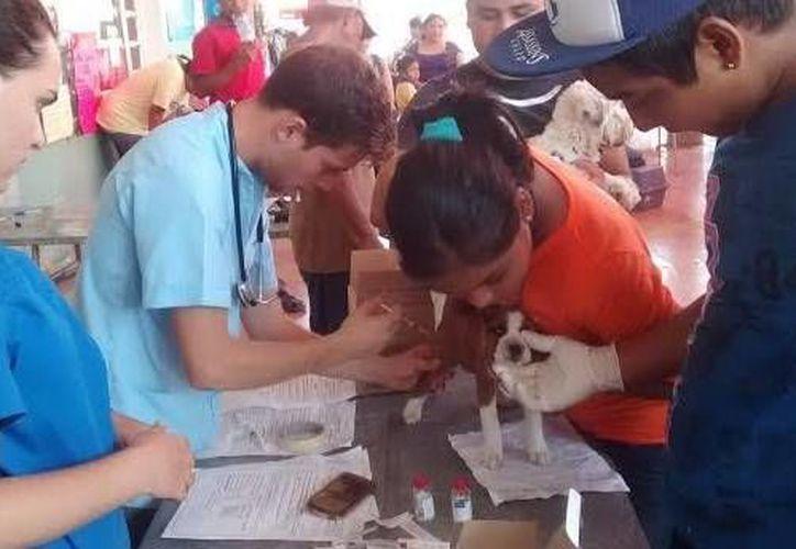 La esterilización comenzó esta mañana en el local del comisariado ejidal. (Óscar Pérez/SIPSE)