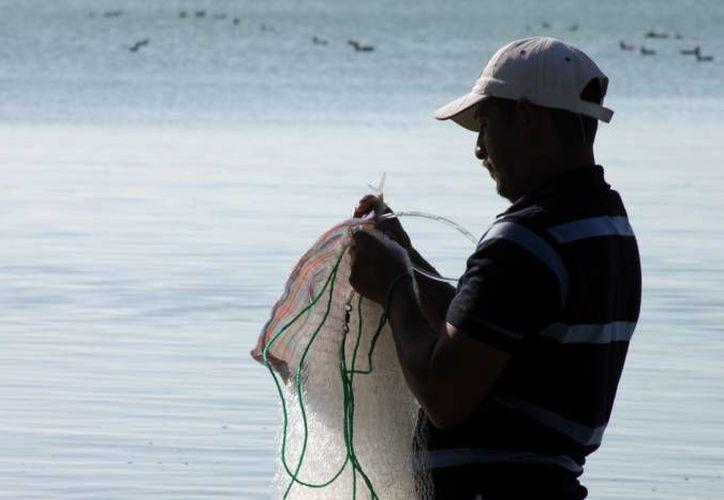 El apoyo únicamente lo recibirán los pescadores que ejerzan la actividad como única fuente de ingresos. (Ernesto Neveu/SIPSE)