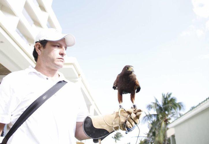 La cadena hotelera española decidió tener un departamento de control de aves. (Israel Leal/SIPSE)