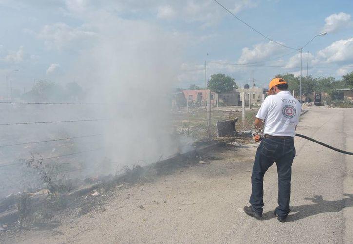 Con las altas temperaturas, incluso de récord, los incendios en Yucatán se han multiplicado, sobre todo los de maleza. (Milenio Novedades)