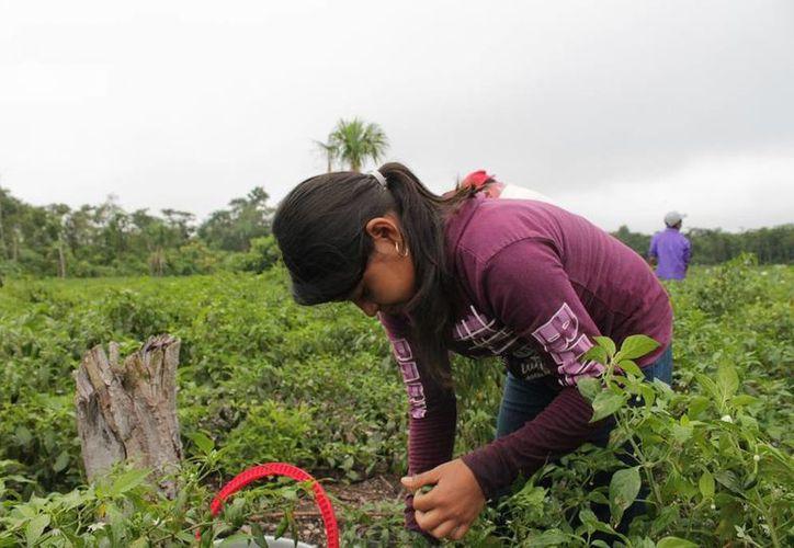 La mayor parte de los menores combinan sus actividades de estudio con las labores de ocupación diarias. (Edgardo Rodríguez/SIPSE)