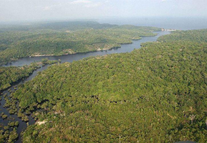 Especialistas descubrieron un gran arrecife de coral en la boca del río Amazonas. (EFE)