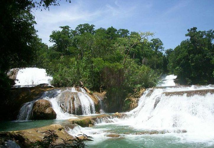 Las cascadas de Agua Azul cuentan con la infraestructura necesaria para hacer más placentera la estancia de los visitantes. (Notimex)