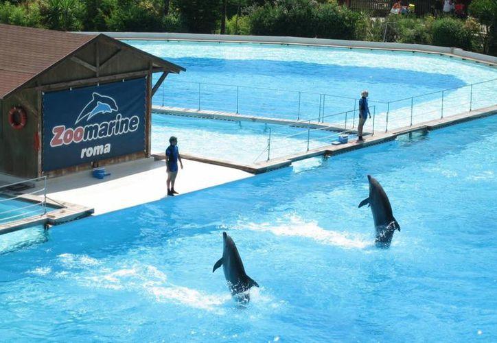 Zoomarine Roma será una importante adición para Dolphin Discovery. (Redacción/SIPSE)