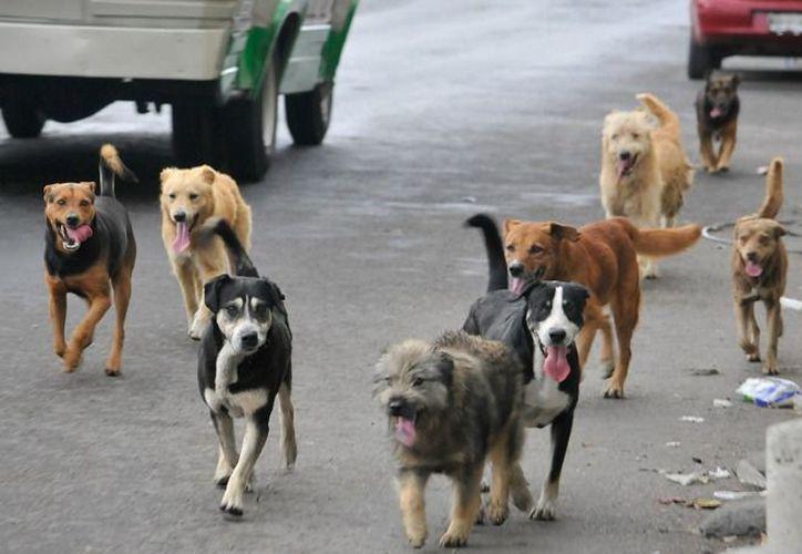 Los hombres armados dispararon balas expansivas contra al menos cinco perros.  (Hoy estado)