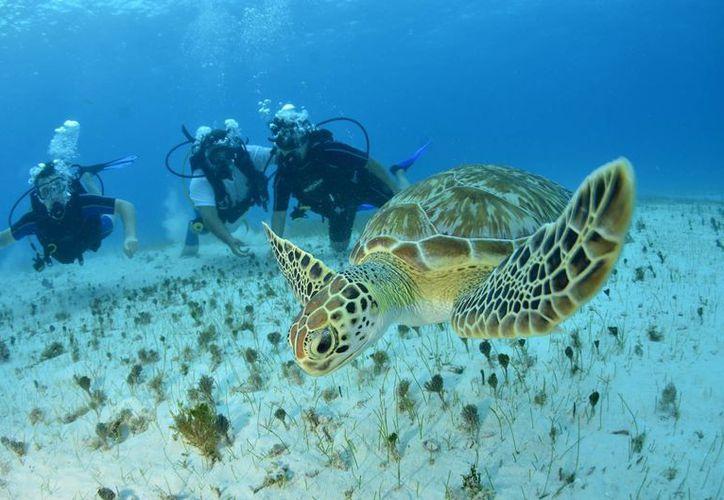 Cancún cuenta con atractivos naturales debido a su ubicación geográfica. (Cortesía/SIPSE)