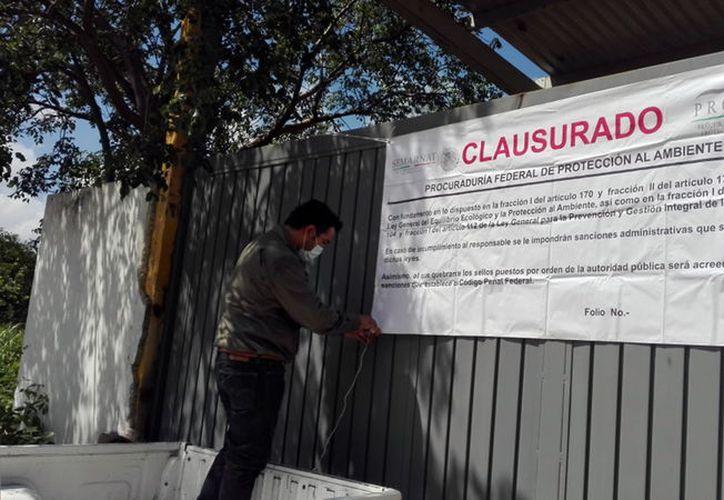"""La empresa """"Medam"""" fue clausurada por la Profepa. (Foto: Milenio Novedades)"""