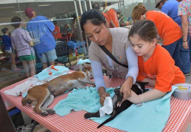Desde este lunes se puso en marcha la octava campaña de esterilización para perros y gatos en Mérida. (Foto cortesía del Gobierno)