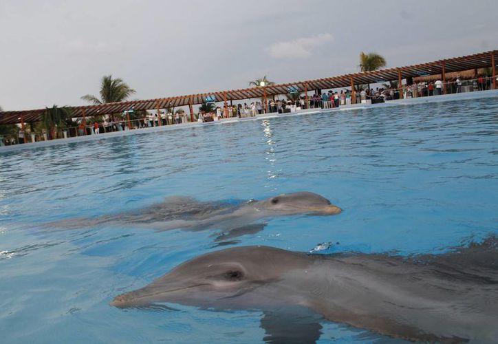 Huéspedes disfrutarán de delfinario. (Israel Leal/SIPSE)