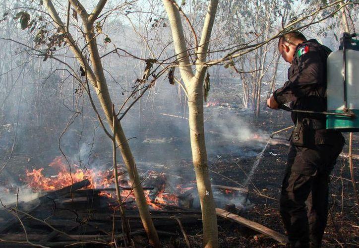 Serán mil brigadistas los que se encarguen de la vigilancia y control de siniestros forestales en Yucatán. (SIPSE)