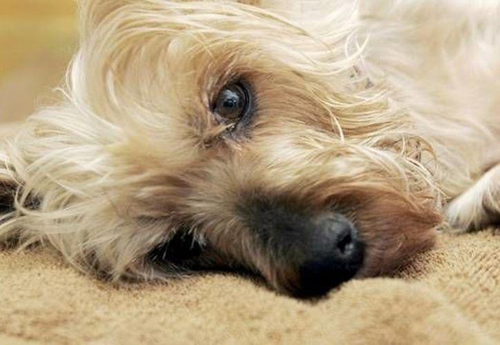 Recalcan que las mascotas 'no son un lujo'. (Archivo/SIPSE)