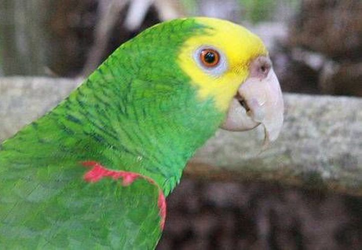 Diversos animales exóticos son ofertados vía Facebook; se exhorta a no adquirir especies en peligro de extinción. (Contexto/Internet)