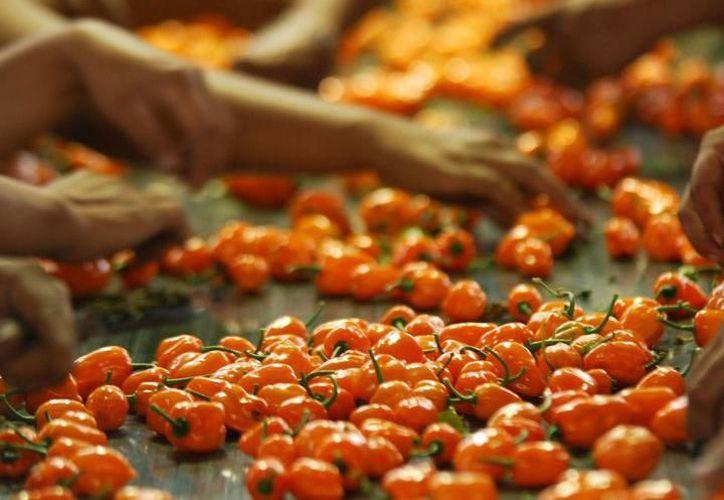 chile habanero de la Península de Yucatán