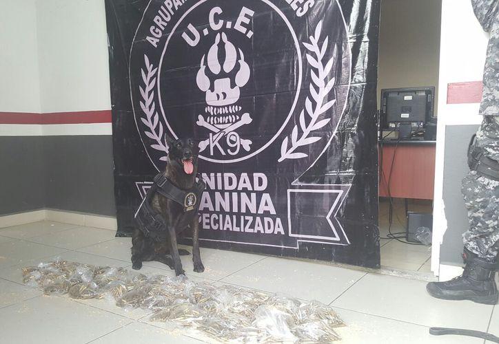 Con apoyo de perros entrenados, la Fiscalía de Jalisco encontró droga en un empresa de paquetería. La imagen no corresponde al hecho, sino a otro decomiso. (Archivo/fge.jalisco.gob.mx)
