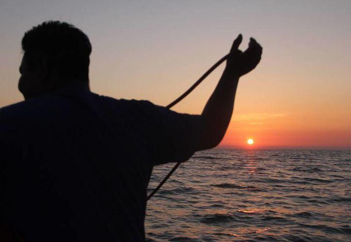 A pesar de que las autoridades 'abrieron' por 10 días la pesca legal de pepino de mar, especie con alta demanda en el mercado asiático, los hechos de sangre no se frenaron: hubo 4 muertos. (Archivo/José Acosta-Milenio Novedades)