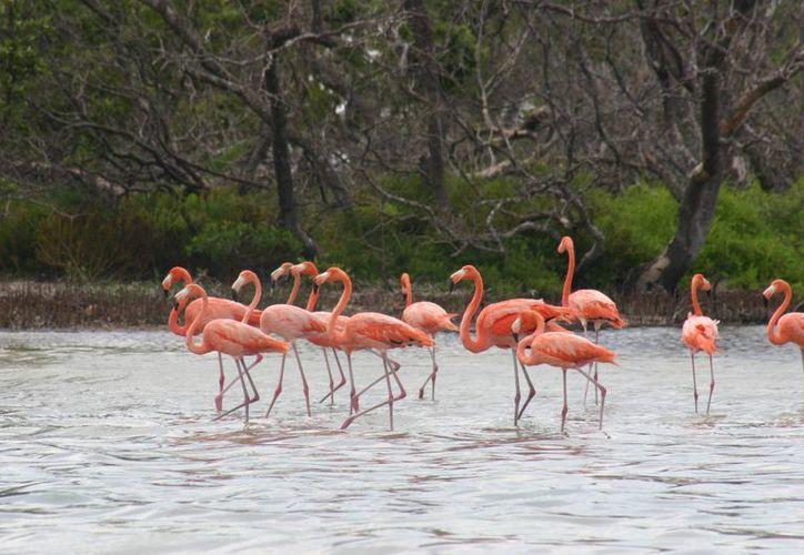 La mayoría de las aves vienen de Estados Unidos y Canadá. (Luis Soto/SIPSE)