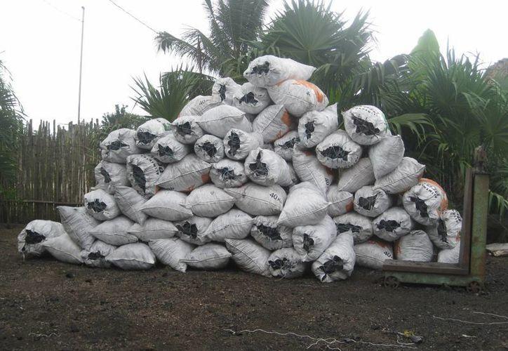 La producción total del carbón vegetal es enviada a la Ciudad de México. (Javier Ortíz/SIPSE)