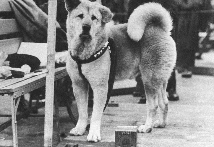 Hachiko es fiel por la lealtad a su amo, un profesor al que esperó toda su vida. (Agencias/ Archivo)