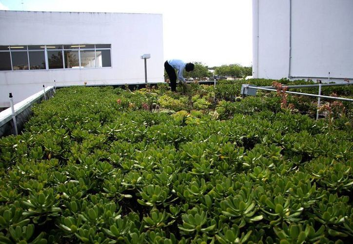 Economía verde, área de oportunidad para inversionistas yucatecos. (Milenio Novedades)