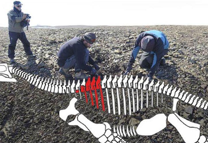 La buena conservación de los restos fósiles ayudará a establecer datos sobre este reptil y sobre el medio donde habitaba. (Foto: Contexto/Internet)