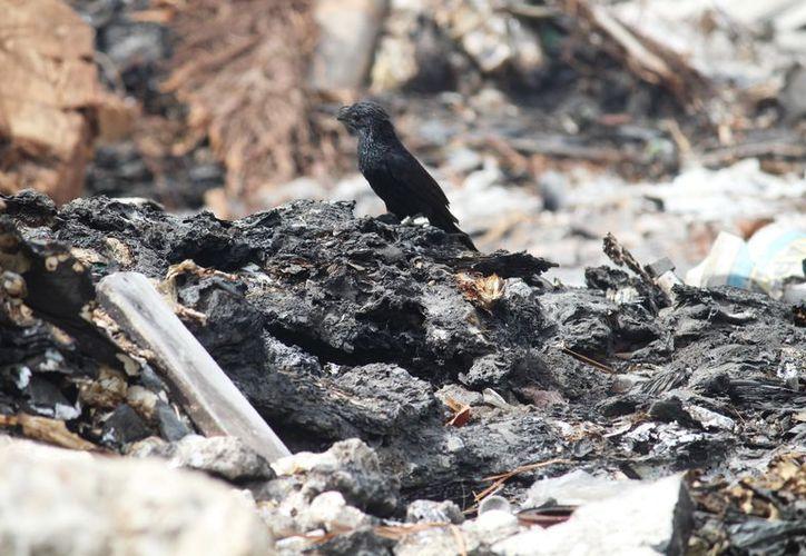 Las aves son las más afectadas por basureros clandestinos. (Octavio Martínez/SIPSE)