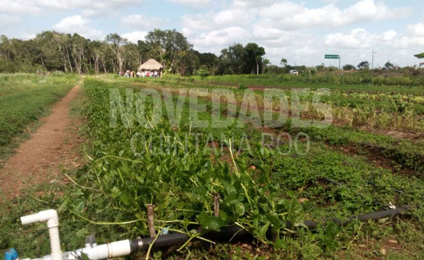En 2012, la Sagarpa concedió un permiso a la compañía Monsanto, para el cultivo de soya transgénica. (Foto: Redacción)