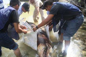 Hallan delfín muerto en Chetumal