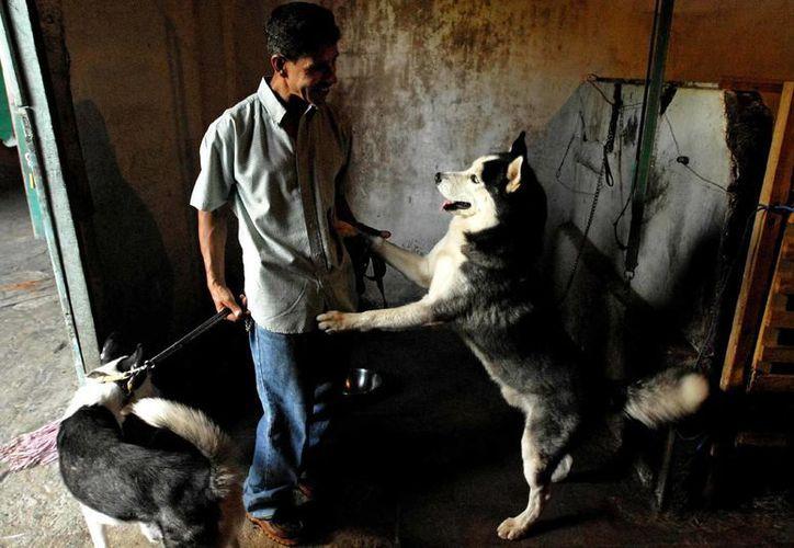 """El caso, denominado por los dueños de los animales como """"juego de niños ricos"""", también es investigado por el Departamento de Drogas de la Policía Nacional. (Archivo/EFE)"""