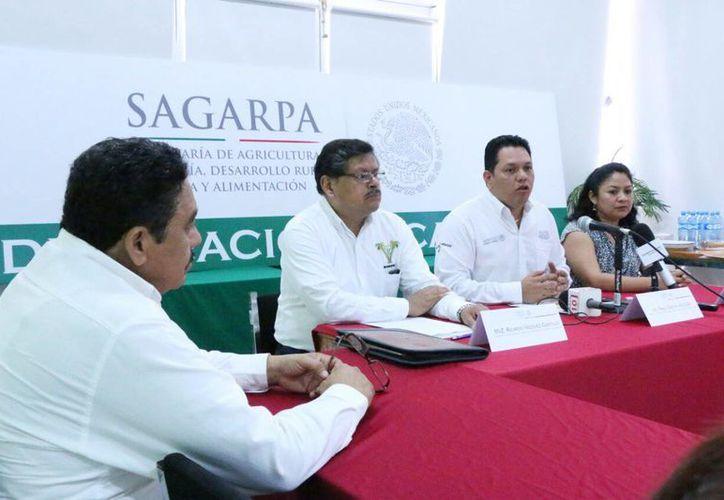 En la conferencia de prensa se informó que en Yucatán hay 11 mil productores de miel y un total de 15 mil apiarios. (José Acosta/Milenio Novedades)