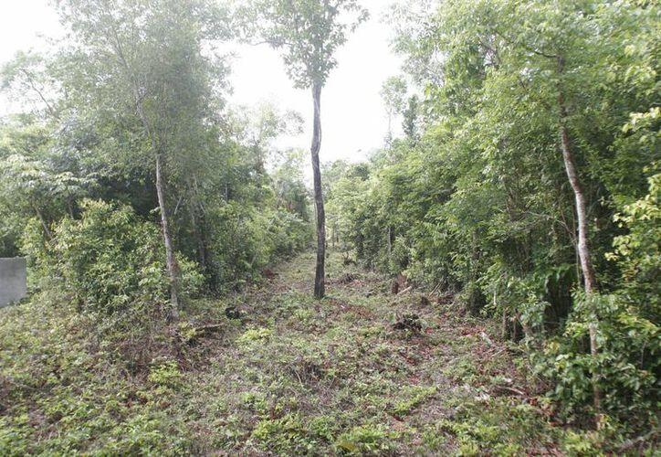 Dentro de las metas se incluye el mantenimiento de 300 hectáreas  reforestadas el año pasado. (Archivo/SIPSE)