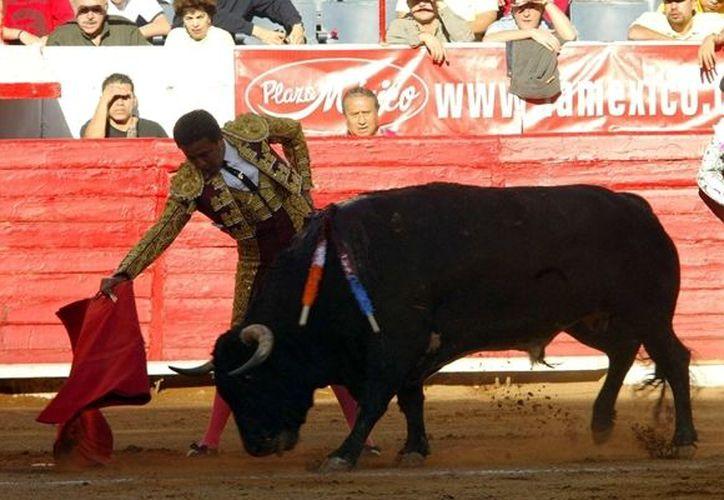 El Diestro de Tacuba lidiará ejemplares de la ganadería de Marco Garfias en su encierro de despedida. (Mexport)