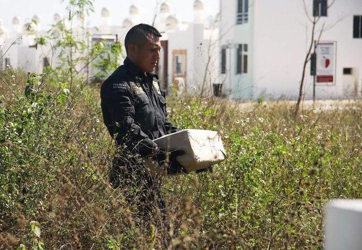 Un elemento de la Policía estatal carga uno de los dos paquetes de mota hallados en Ciudad Caucel. (Milenio Novedades)