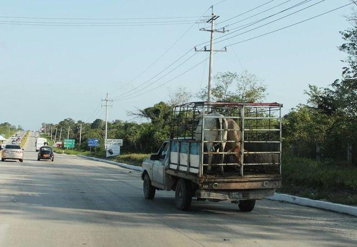 En Quintana Roo no existe un control de comercialización de los animales, lo que está generando un despoblamiento desmesurado. (Edgardo Rodríguez/SIPSE)